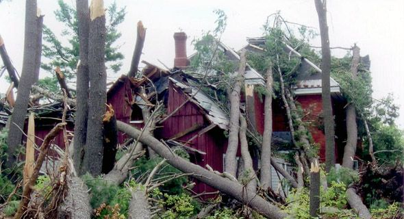 several trees on house