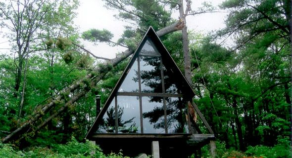 tree on glass house