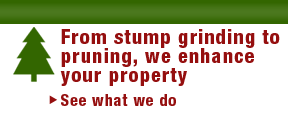 from stump griding to pruning, we enhance your property